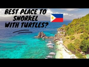 Best Spot to Snorkel with Turtles in the Philippines?